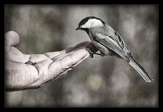Trust / vogelium
